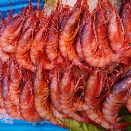 Gambas rojas de Almería